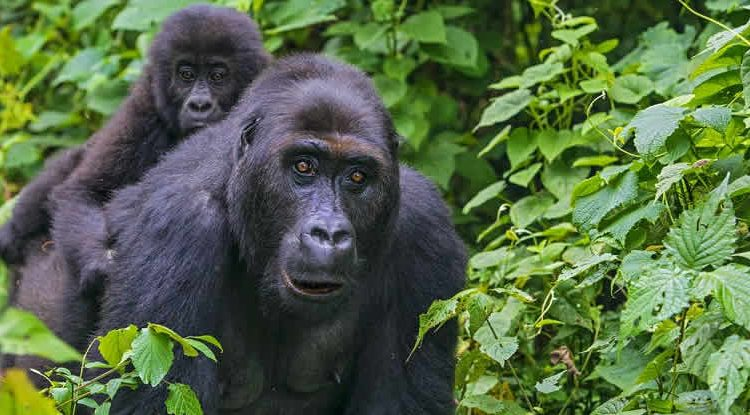 Top activities to do in Kahuzi Biega National Park