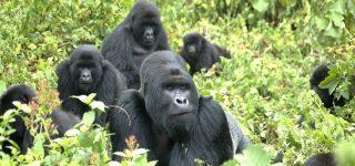 5 days Uganda safari Bwindi Impenetrable forest national park and Queen Elizabeth National park